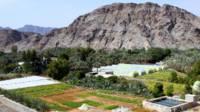 Plantación de palmeras en Fujairah