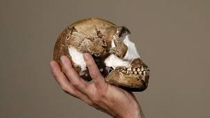 El cerebro del Homo naledi se parece en tamaño al de un gorila / Reuters