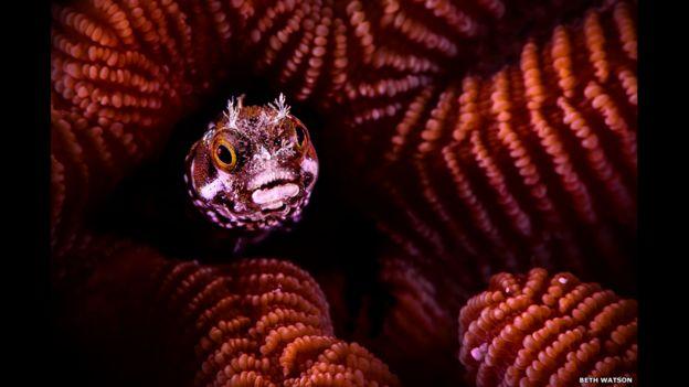 La imagen que ganó la cateogoría de fotografía acuática es