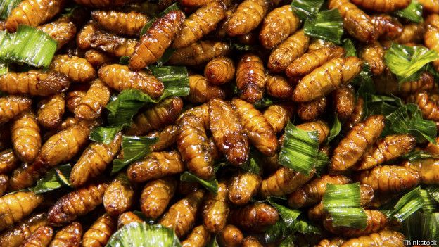 Жареные личинки тутового шелкопряда
