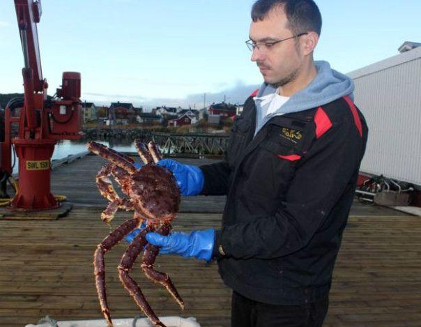 Biólogo marino ruso, Roman Vasiliev