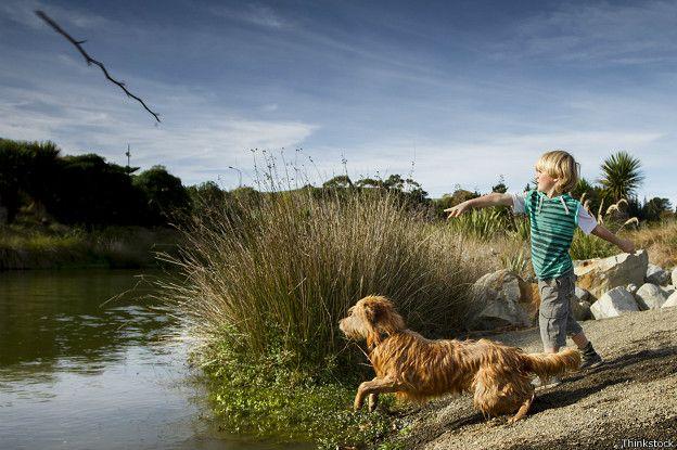 Perro jugando a atrapar el palo