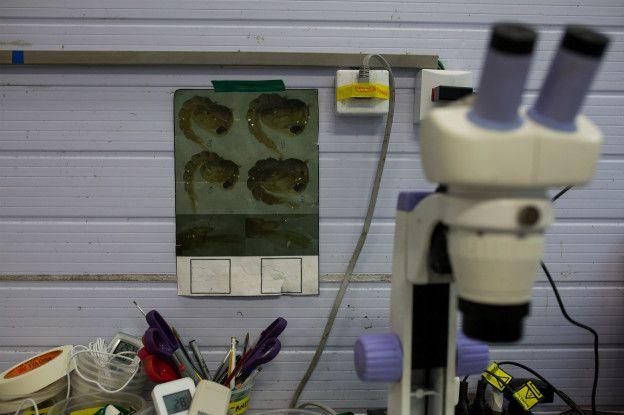 Laboratorio de genética.