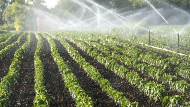 Agricultura de irrigação (Thinkstock)