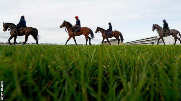 Horses exercising at Cheltenham Racecourse