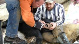 Científicos y osos