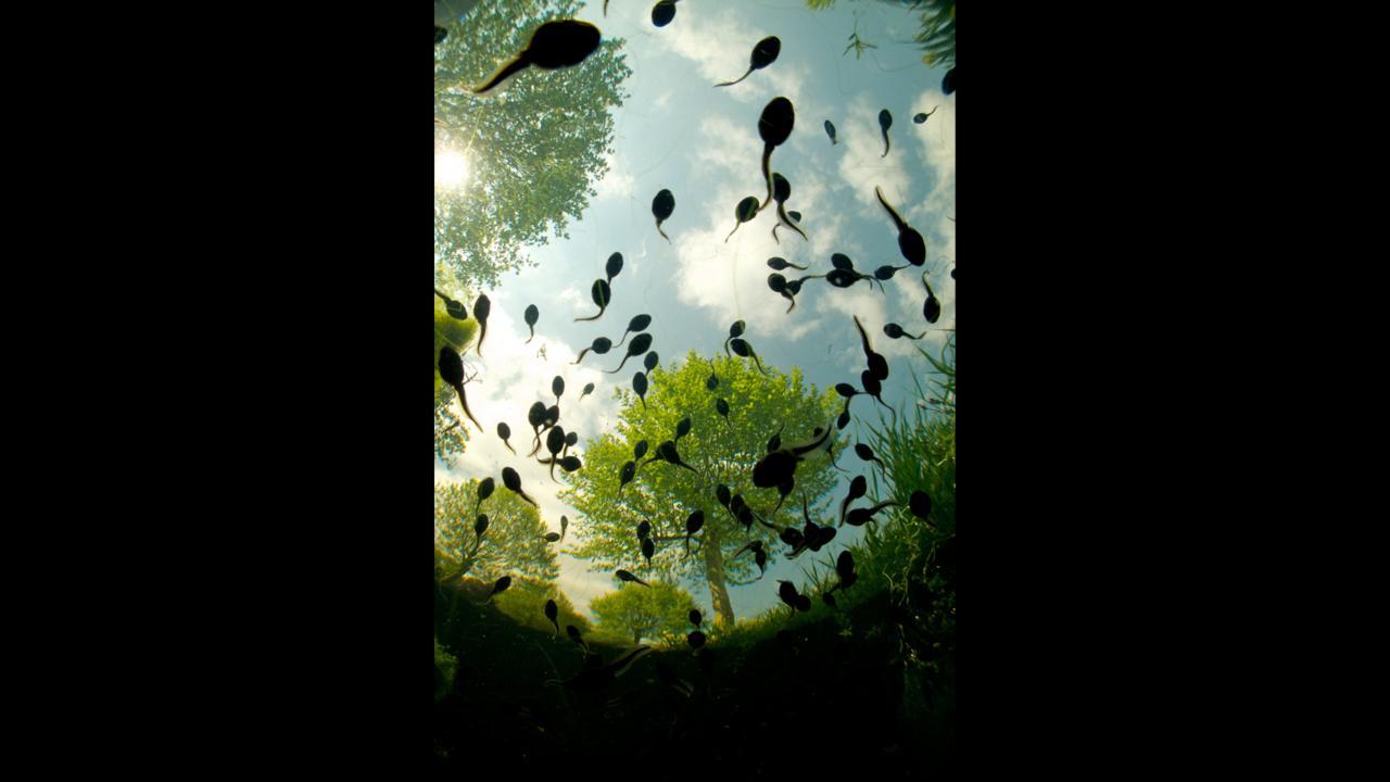 Tadpoles overhead (Credit: Bert Willaert)