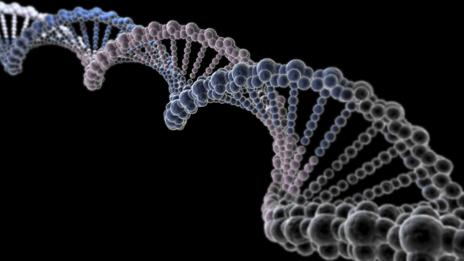 DNA (SPL)