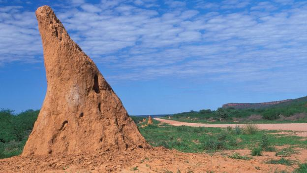A hill made by Macrotermes michaelseni (Credit: Loetscher Chlaus/Alamy Stock Photo)