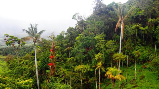 Hiking through the dense Amazon jungle (Credit: Credit: Krista Eleftheriou)