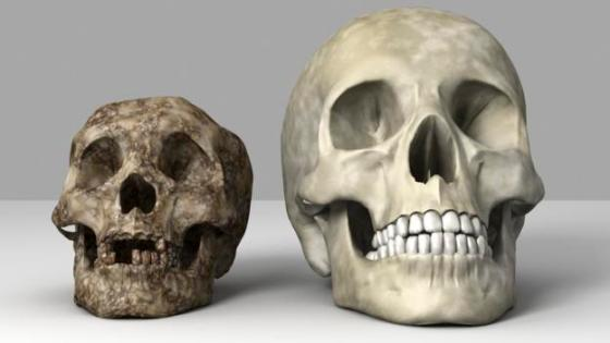 The 'hobbit' (left) was tiny compared to modern humans (Credit: Equinox Graphics/SPL)