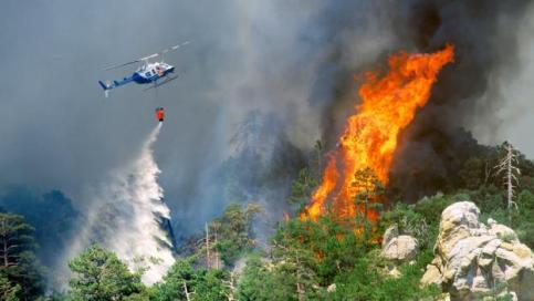 Image result for images of preventing forest fire