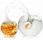 large_fishbowl