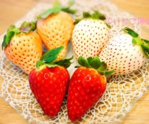 赤【古都華】ピンク【淡雪】白【パールホワイト】3色いちご!奈良県の注目品種を実食!