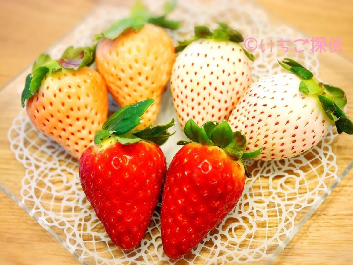 イチゴ探偵|赤【古都華】ピンク【淡雪】白【パールホワイト】3色いちご!奈良県の注目品種を実食!