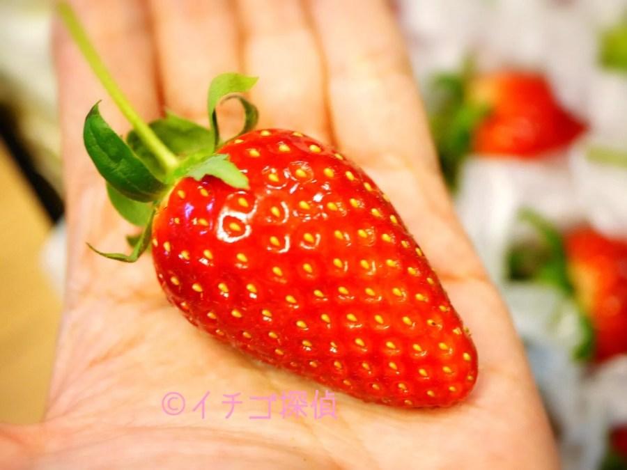 イチゴ探偵|日本で唯一の幻の品種!【Xベリー】という著名人御用達の秘密のいちごをお取り寄せ!