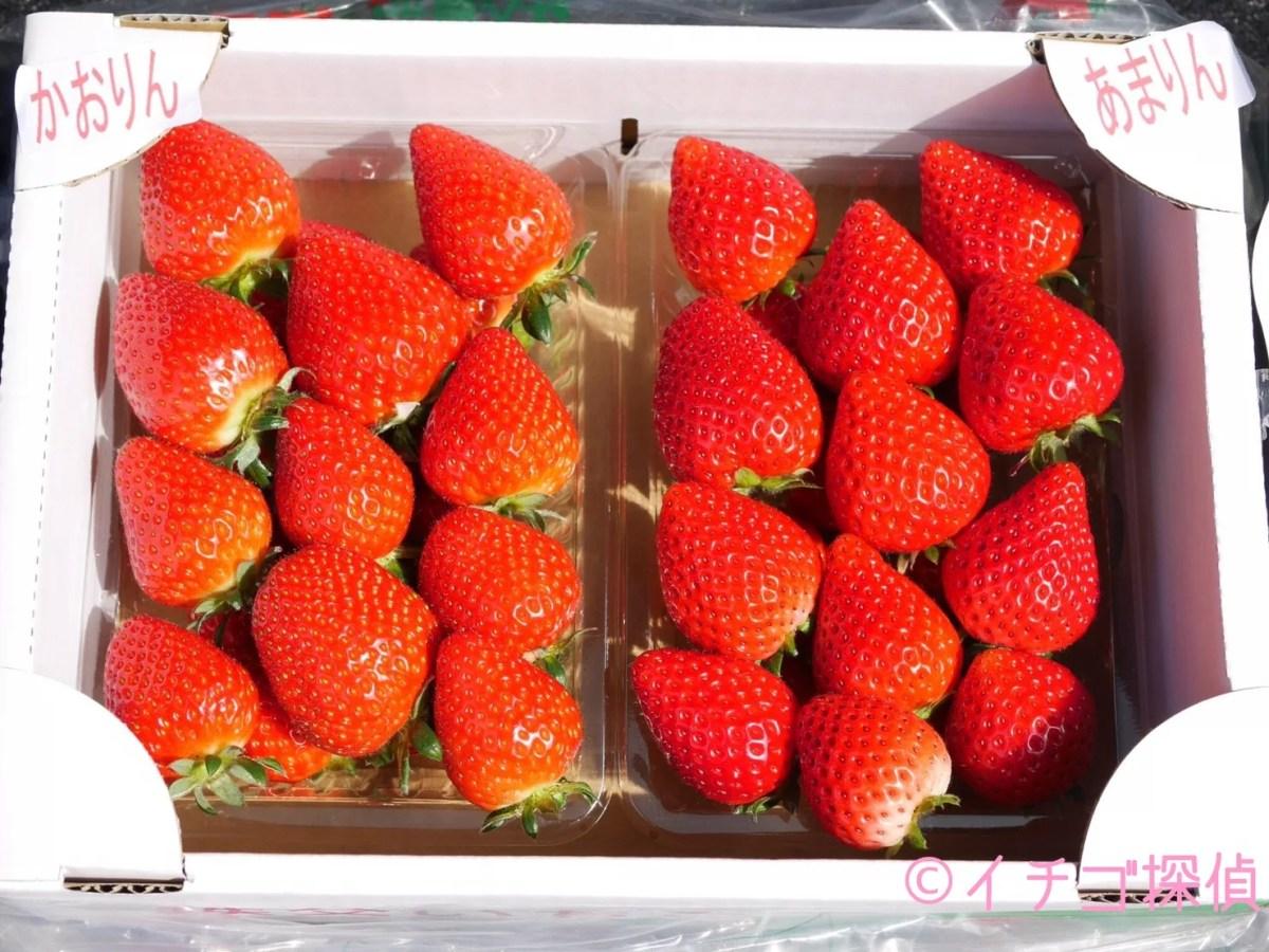 埼玉の新品種いちご姉妹【かおりん】と【あまりん】を実食!市川いちご園&ただかね農園で彩の国生まれのいちご姉妹をGET!