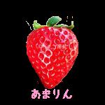 イチゴ探偵|あまりん品種図鑑・断面図