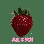 イチゴ探偵|真紅の美鈴品種図鑑・断面図