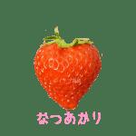 イチゴ探偵|なつあかり品種図鑑・断面図
