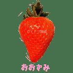 イチゴ探偵|おおきみ品種図鑑・断面図