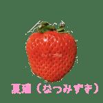 イチゴ探偵|夏瑞(なつみずき)品種図鑑・断面図