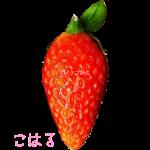 イチゴ探偵|こはる品種図鑑