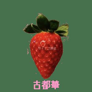 イチゴ探偵 古都華品種図鑑