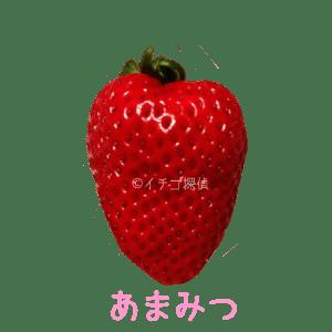 イチゴ探偵|あまみつ品種図鑑