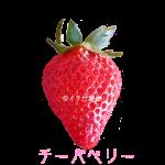 イチゴ探偵|チーバベリー品種図鑑