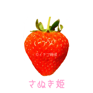 イチゴ探偵|さぬきひめ品種図鑑
