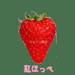 イチゴ探偵|紅ほっぺ品種図鑑・断面図