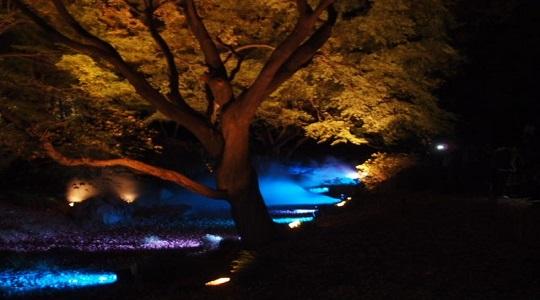 六義園の紅葉のライトアップ