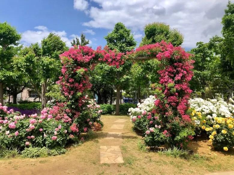 大洲防災公園のポール仕立てのハート型のバラ