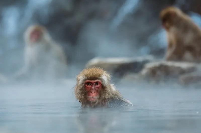 猿が温泉に入っている様子