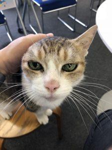 猫のミーちゃんご挨拶