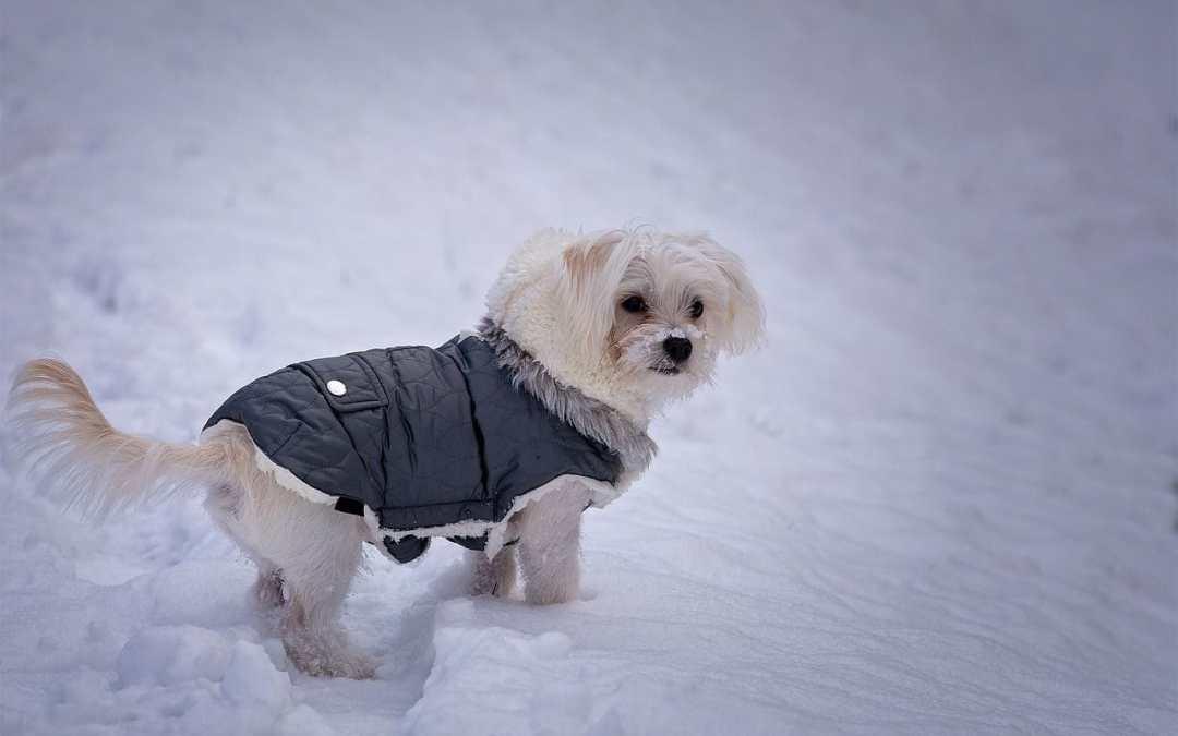 Welche Winterbekleidung braucht mein Hund?