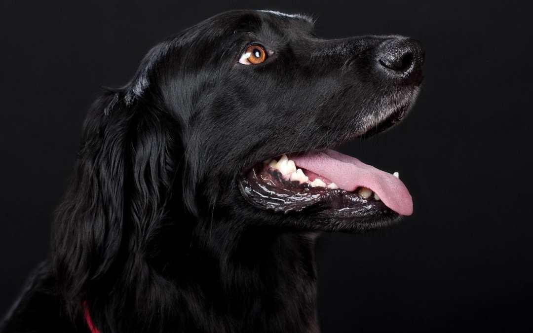 Checkliste für den Kauf eines Hundes