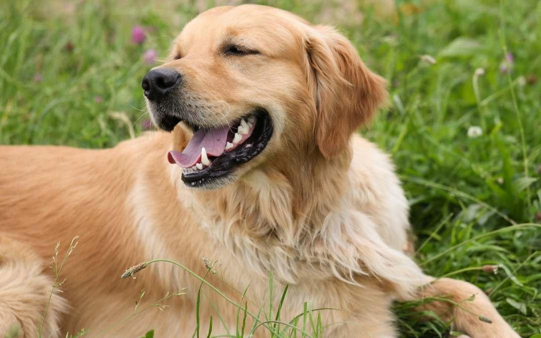 Futter für alte Hunde: Das ist zu beachten