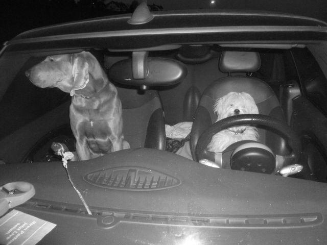 Hunde Foto: Andreas und Luba und Goehte – Fahren ohne Führerschein