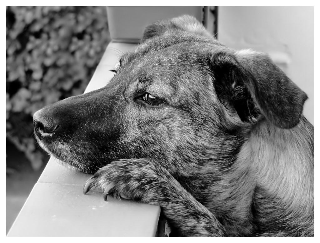 Hunde Foto: Petra und Abby - Warten auf Mutti