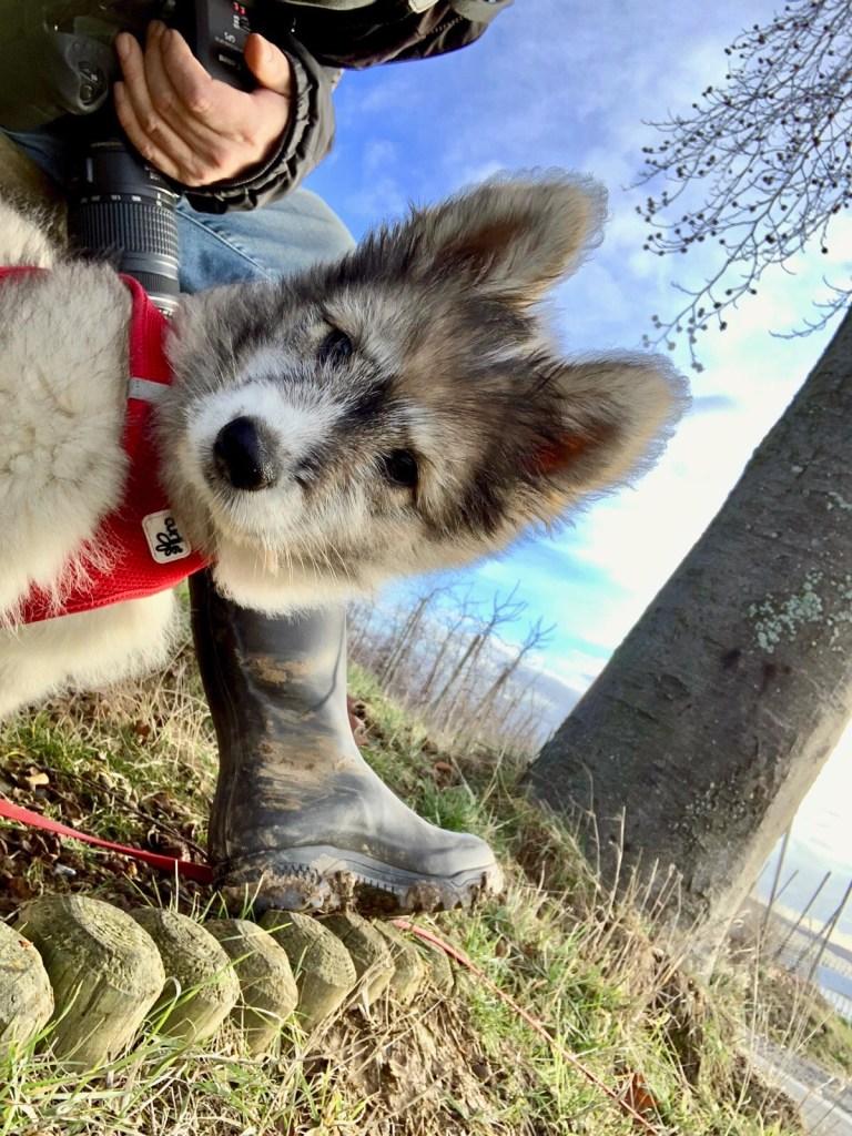 Hunde Foto: Sabine und Karla - Kuckuck!