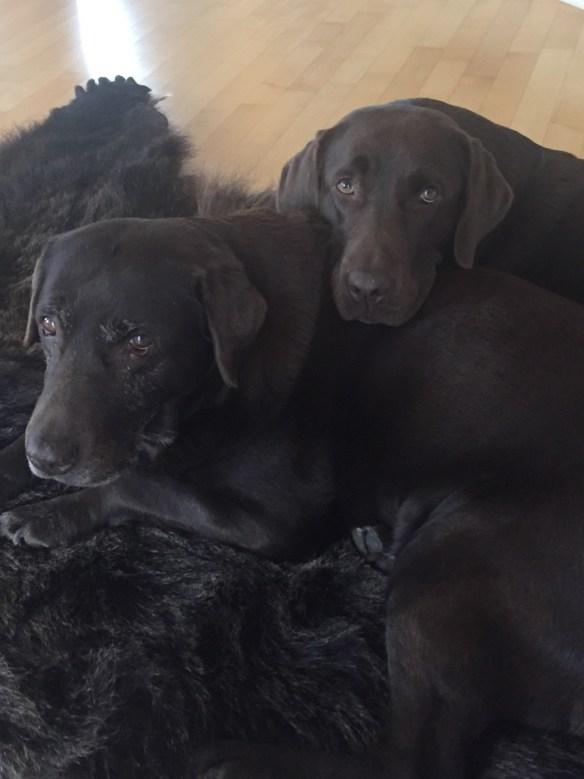 Hunde Foto: Reni und Mira & Cora - Mama und Tochter