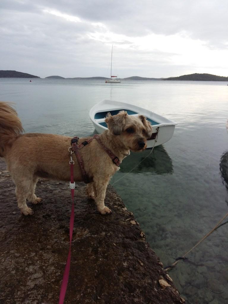 Hunde Foto: Sandra und Lilo - Lilo und das Meer