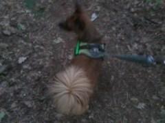 Hunde Foto: Ralf und Luna - Meine Antenne (ohne DVBT2)