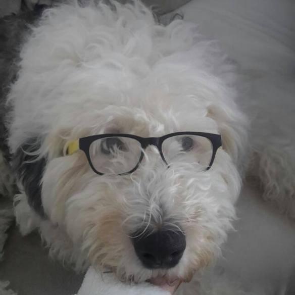 Hunde Foto: Katy und Jordy - Ich sehe alles🐶
