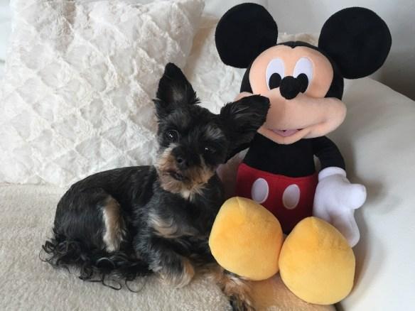 Hunde Foto: Uschi und Trixi - Die gehört mir