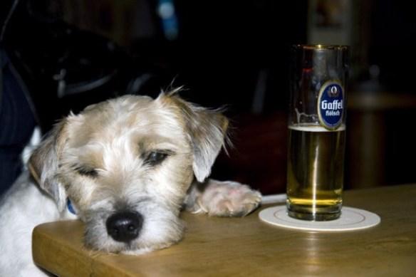 Hunde Foto: Mathias und Mechas - Feiertage sind hart!
