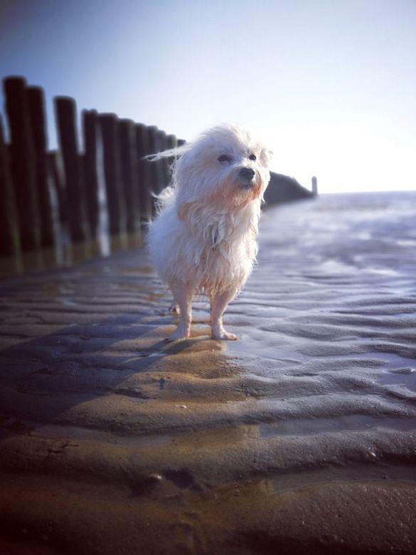 Hunde Foto: Sven und Rocky - Ferien