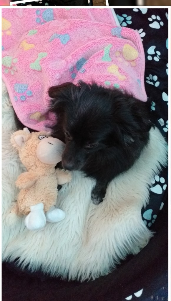Hunde Foto: Doris und Gerade ausgeschlafen - Guten Morgen ☺️ ☺️ ☺️ ☺️